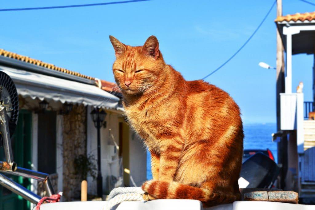 cat 1502666